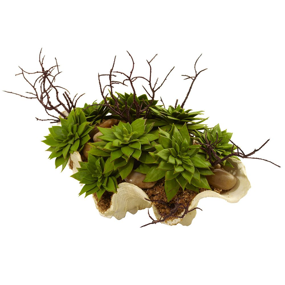 nearly natural Succulent Garden Seashell Planter