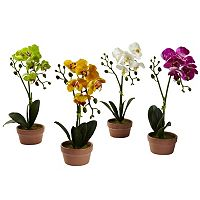 nearly natural 4 pc Phalaenopsis Orchid Set