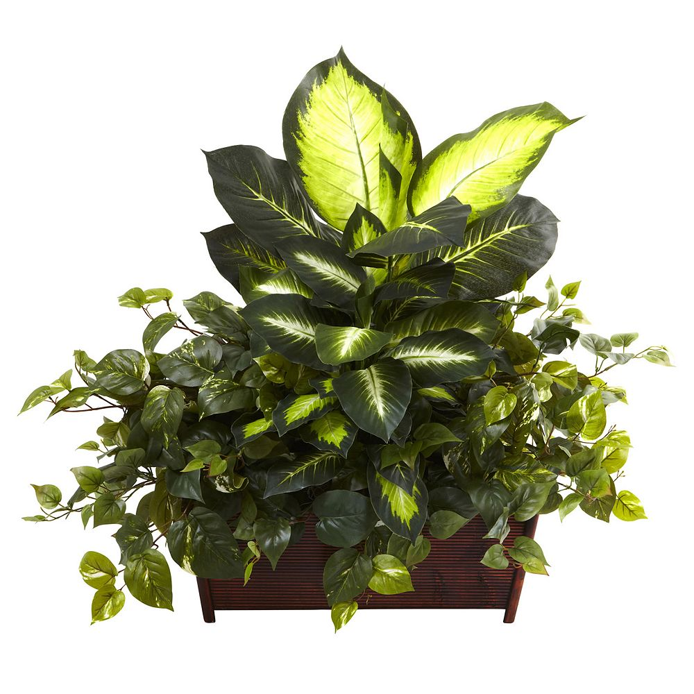 nearly natural Dieffenbachia Plant Arrangement