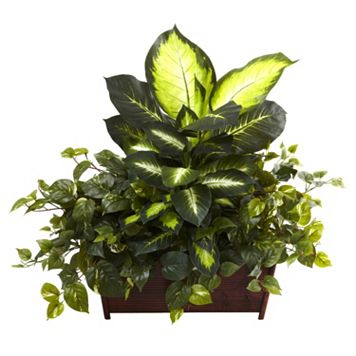 nearly natural Dieffenbachia Plant Arrangement