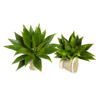 nearly natural 2-piece Agave Succulent Plant Set