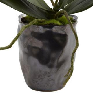 nearly natural 2-piece Mini Phalaenopsis Flower Set