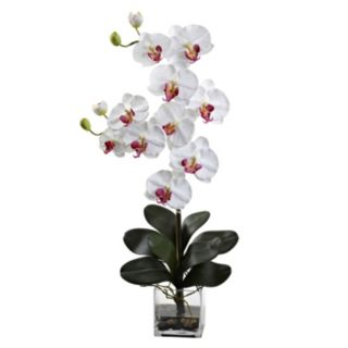nearly natural Phalaenopsis Floral Arrangement