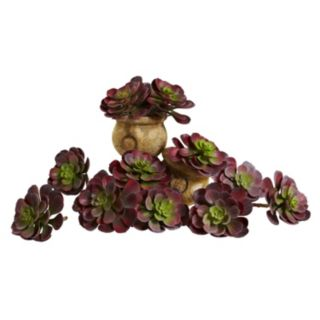 nearly natural 12-piece Echeveria Succulent Arrangement Set