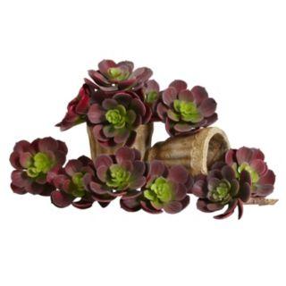 nearly natural 12-piece Echeveria Succulent Plant Set