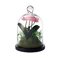 Elements Artificial Orchid Glass Terrarium Dome