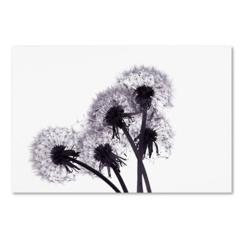 "Trademark Fine Art ""Bunch of Wishes"" Canvas Wall Art"