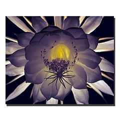 Trademark Fine Art 'Night Angel' Canvas Wall Art by Kurt Shaffer