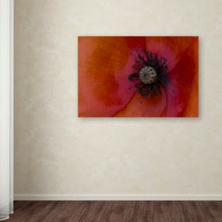 "Trademark Fine Art ""Poppy Detail"" Canvas Wall Art by Kurt Shaffer"