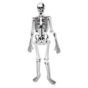 Skeleton Floor Puzzle by Learning Resources