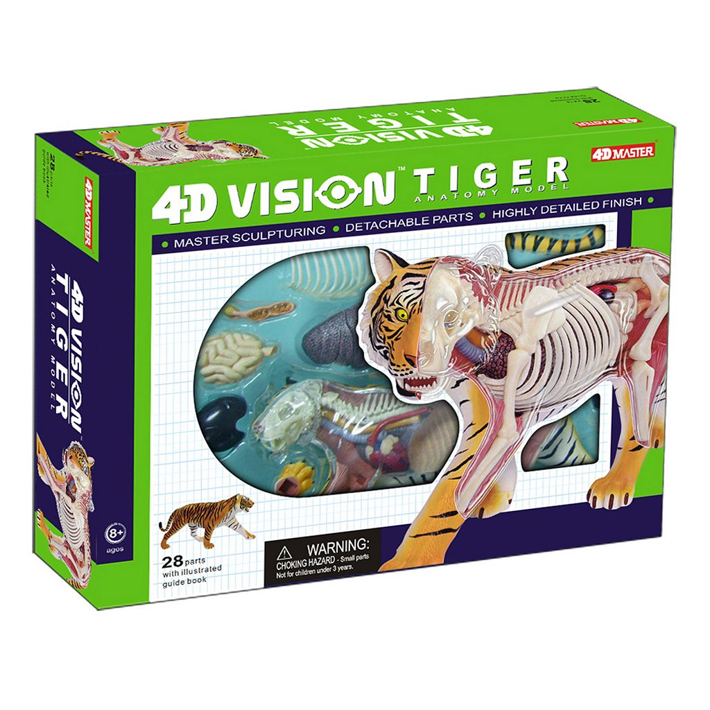 4D Vision Tiger Anatomy Model by John N. Hansen Co.