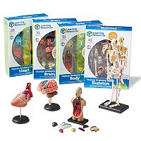 Learning Resources Human Anatomy Models Set