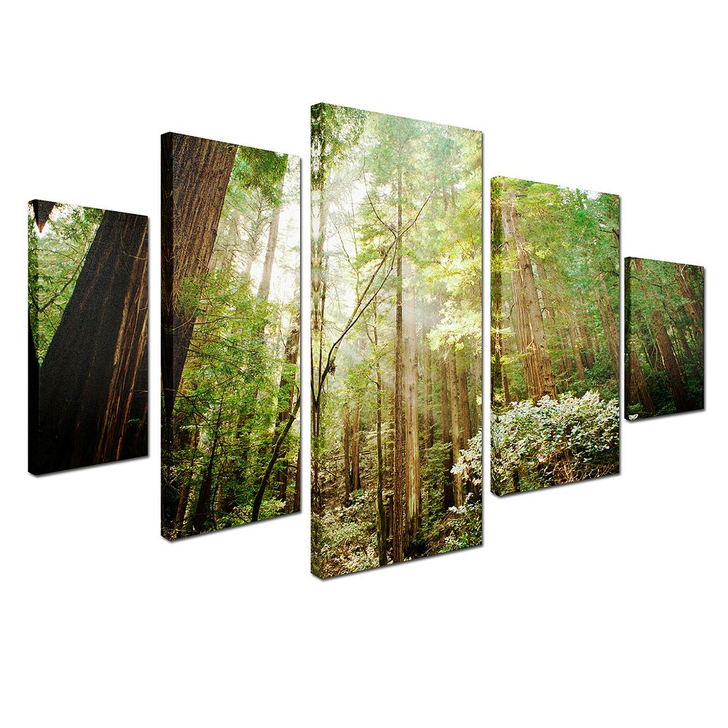 Trademark Fine Art ''Muir Woods'' 5-pc. Wall Art Set