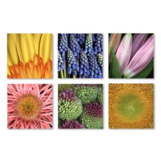 Trademark Fine Art ''Aiana'' Floral 6-piece Canvas Wall Art Set