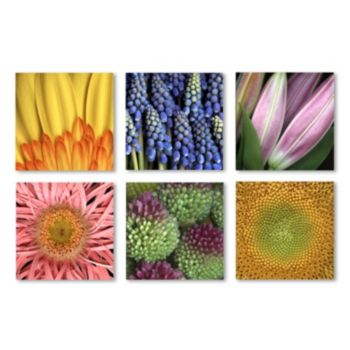Trademark Fine Art ''Aiana'' Floral 6-piece Canvas Wall Art Set