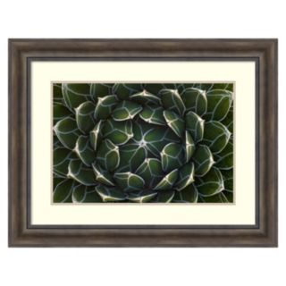 """""""Queen Victoria's Agave, Saguaro National Park'' Framed Wall Art"""