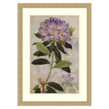 ''Rhododendron II'' Framed Wall Art