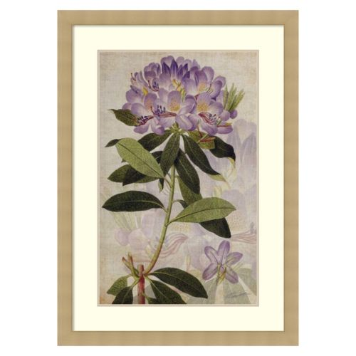 """Rhododendron II"" Framed Wall Art"