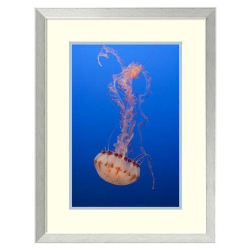 ''Purple-Striped Jellyfish, Monterey Bay Aquarium, California'' Framed Wall Art