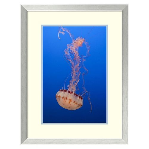 ''Purple-Striped Jellyfish, Monterey Bay Aquarium, California'' Framed Wall Art