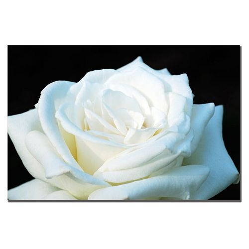 ''White Rose II'' Canvas Wall Art