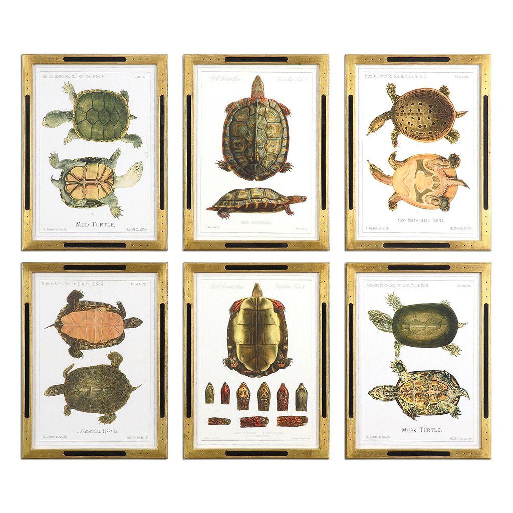 Tortoise Study Wall Art 6-piece Set
