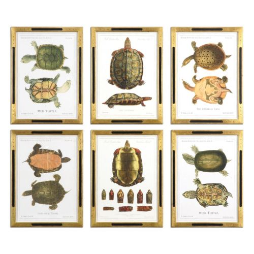 Tortoise Study Wall Art 6-piece Set