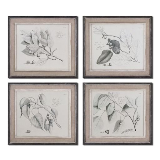 Sepia Leaf Study Wall Art 4-piece Set