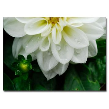''White Dahlia'' Canvas Wall Art