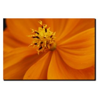 ''Orange Flower'' Canvas Wall Art