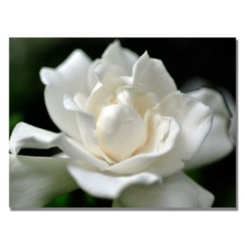 ''Lovely Gardenia'' Canvas Wall Art