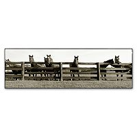 ''Thoroughbreds'' Canvas Wall Art