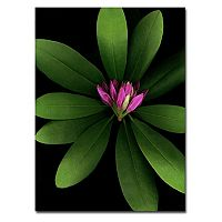 ''Botanical'' Canvas Wall Art