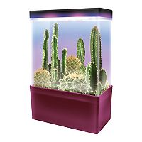 Dunecraft Cactus Garden LED Light Cube Terrarium