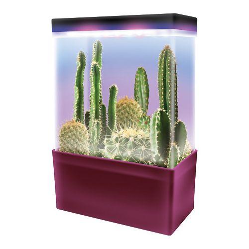 DuneCraftCactus Garden LED Light Cube Terrarium