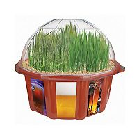 Dunecraft Beer Garden Plant Kit