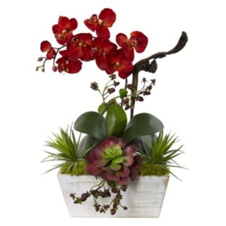 nearly natural Artificial Orchid & Succulent Arrangement