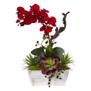 nearly natural Artificial Orchid & Succulent Arrangement