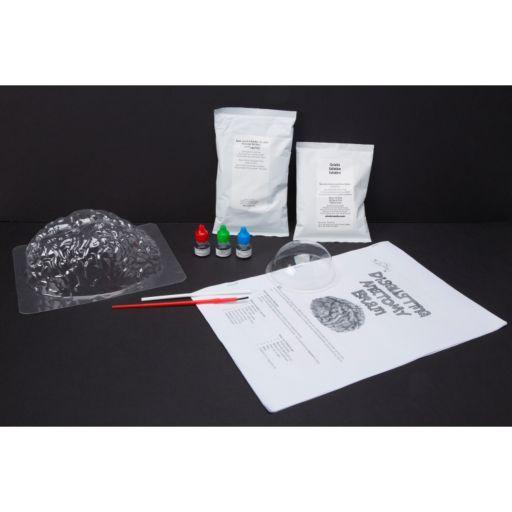 Scientific Explorer Disgusting Anatomy of the Brain Science Kit