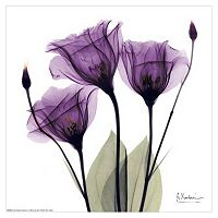 Art.com Royal Purple Gentian Trio Wall Art Print