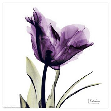 Art.com Royal Purple Parrot Tulip Wall Art Print