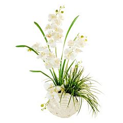 Designs by Lauren Artificial Phalaenopsis Orchid Arrangement in Seashell Vase