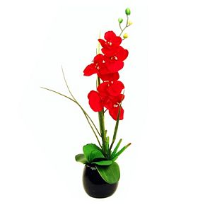 Designs by Lauren Artificial Red Phalaenopsis Orchid and Succulent Arrangement
