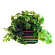Designs by Lauren Artificial Pothos Plant