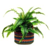 Designs by Lauren Artificial Fern Plant