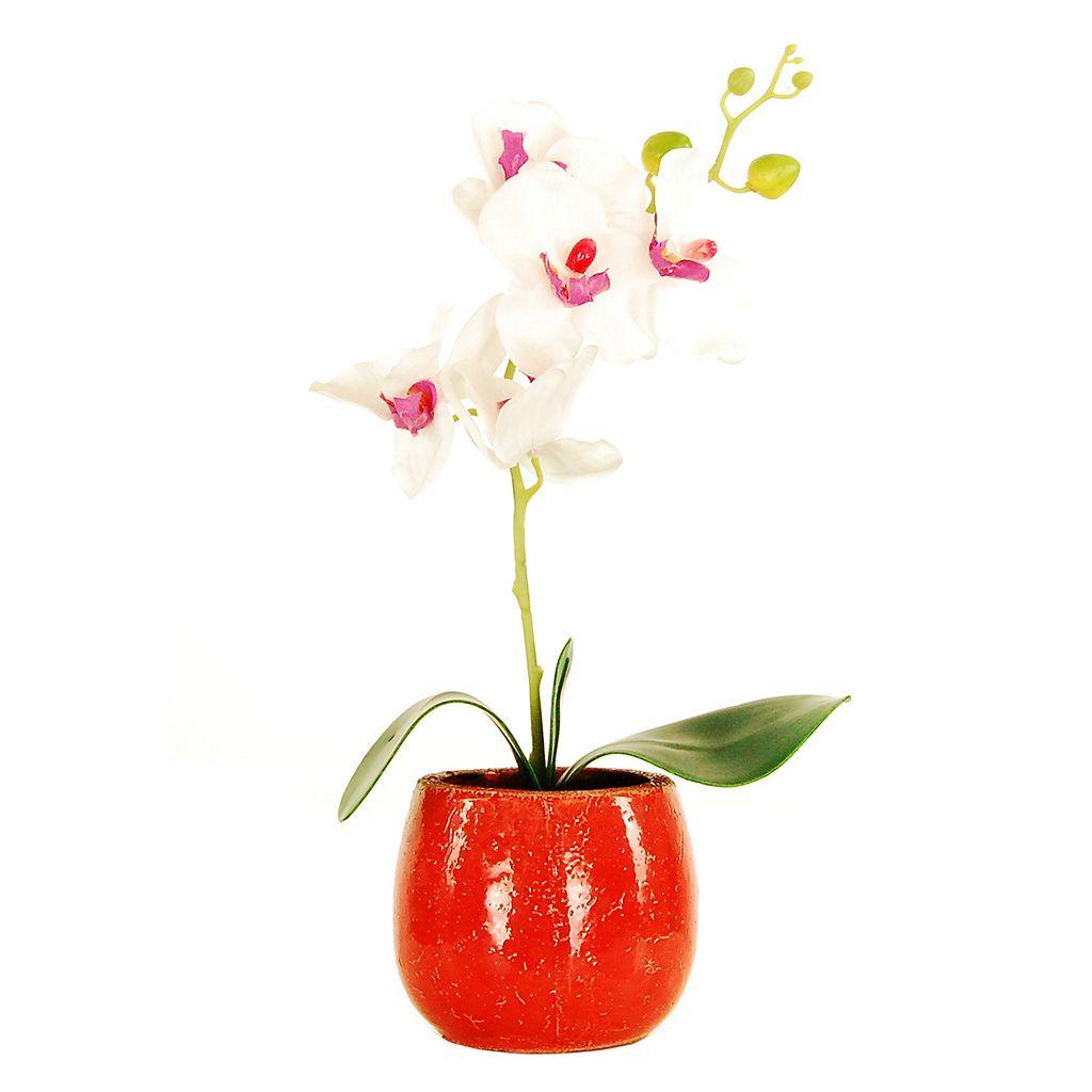 Designs by Lauren Artificial Phalaenopsis Orchid Plant