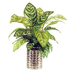 Designs by Lauren Artificial Prayer Plant