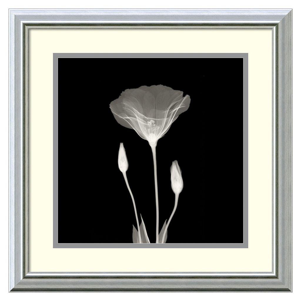 Amanti Art Poppy in Lace Framed Wall Art