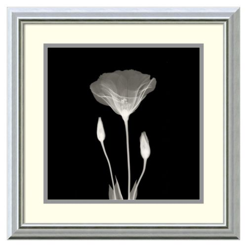 Amanti Art Poppy in Lace Frame...