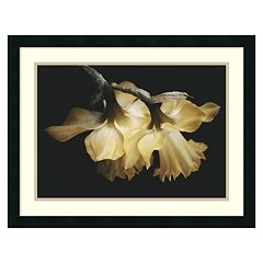 Amanti Art Sunning Daffodils Framed Wall Art